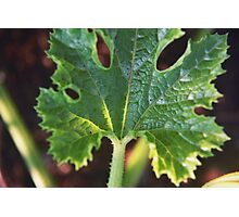 Textured Garden Leaf  Photographic Print