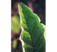 Purple Veined Leaf Photographic Print