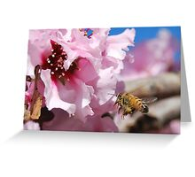 Proof of Spring Greeting Card