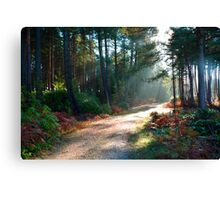 Daybreak in the Forest Canvas Print