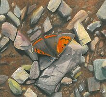 Small Copper by Richard Paul