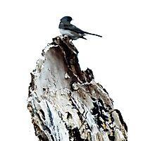 One Little Bird Photographic Print