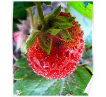 Yummy Strawberry Poster