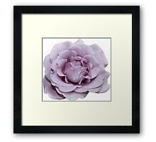 Lilac Garden Rose - Hipster/Pretty/Trendy Flowers Framed Print