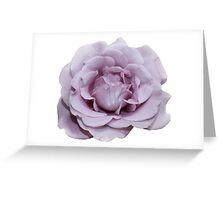 Lilac Garden Rose  Greeting Card