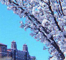 Citi Plaza & Dogwoods 01 by Jeff Alexander
