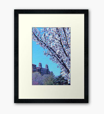 Citi Plaza & Dogwoods 01 Framed Print