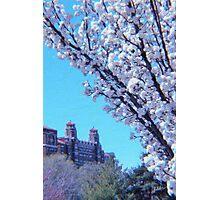 Citi Plaza & Dogwoods 01 Photographic Print