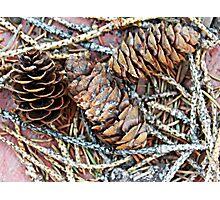 Pretty Little Pinecones Photographic Print
