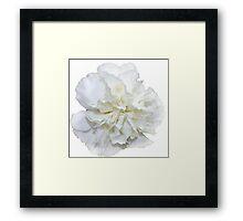 Single White Carnation  Framed Print