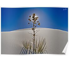 Soaptree Yucca Poster