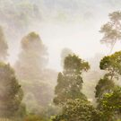 Foggy Forest by Steven  Siow