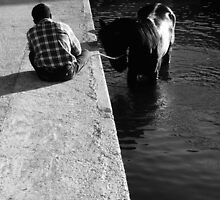 Cooling a horse in the port of Gozo (Malta) by VanOostrum