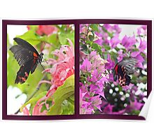 Common Rose Swallowtail collage Poster
