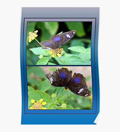 Small Blue Grecian Butterfly collage Poster