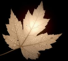 Leaf by Christine Lake