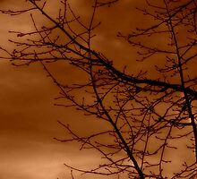 Budding Tree in Sepia by Lisa Taylor