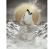 Turn Your Face To The Sun (Stay Gold Wolf) Photographic Print