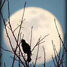 Redwinged Blackbird and the Moon by TrendleEllwood
