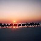 Cable Beach Camel Train by coolkoala