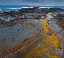 Golden Pool by Neil