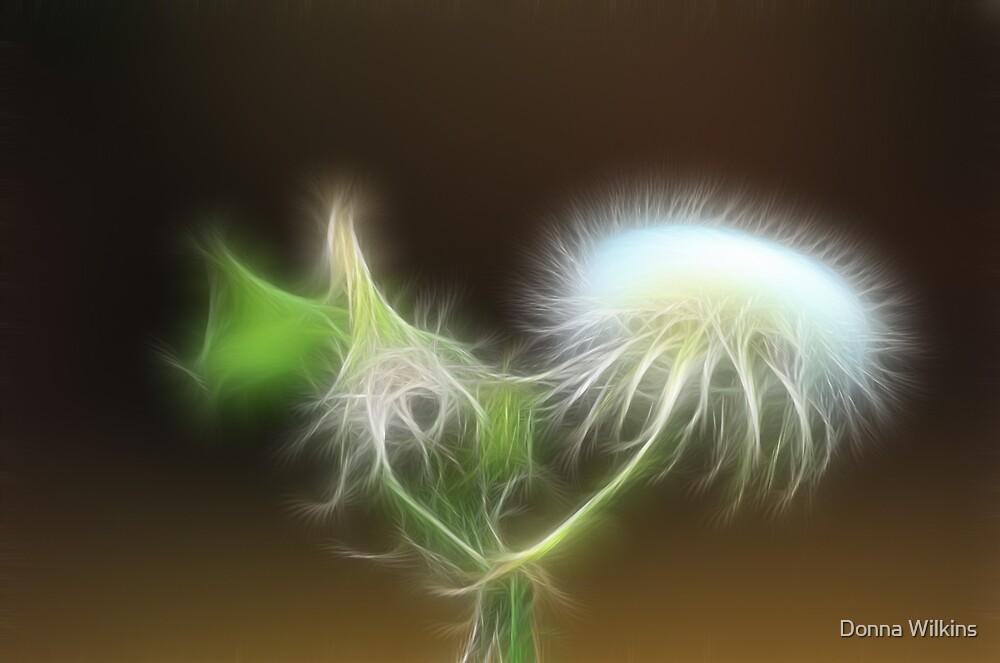 Shaggy White Puff  by Donna Adamski