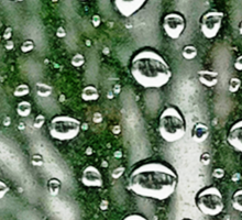 Drops and Trees  Sticker