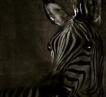 Zebra Portrait by Pamela Bates