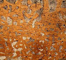 Dinosaur bone under the microscope by Zosimus