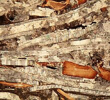 Thin section of fossil calcareous shell fragments  by Zosimus