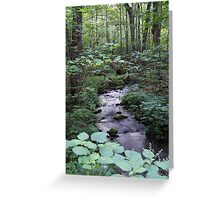 Quiet Brook in Gatineau Park Greeting Card
