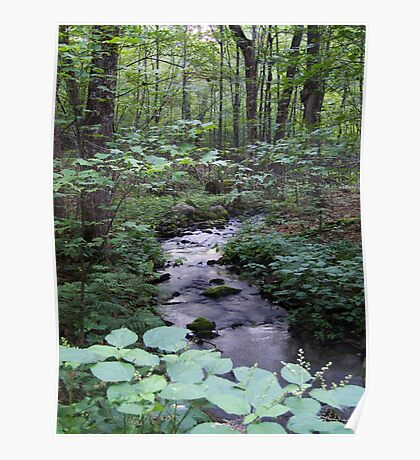 Quiet Brook in Gatineau Park Poster
