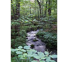 Quiet Brook in Gatineau Park Photographic Print