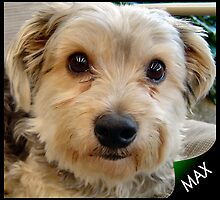 MAX MY MATE by Colin Van Der Heide