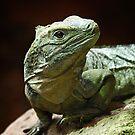 Panamanian Iguana by Karen Scrimes