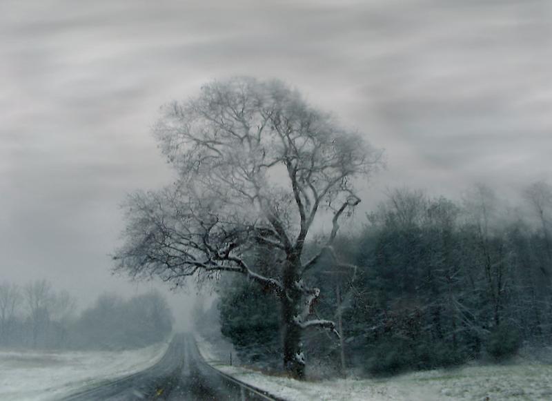 FOGGED TREE by Spiritinme