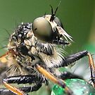 Roberfly by Heavenandus777