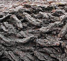 Braide:  Elm Tree Detail Macro by Rebecca Bryson