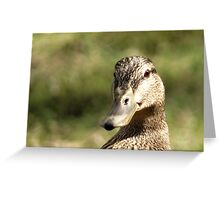 Female Mallard Hen Greeting Card