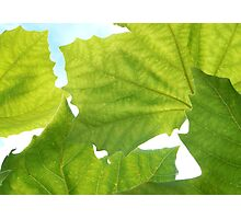 Leafs Wallpaper Photographic Print