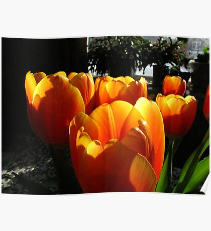 Dreaming of Spring......   Poster