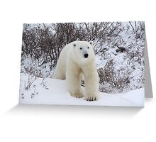 Polar Bear Coming out of the Arctic Willow Greeting Card