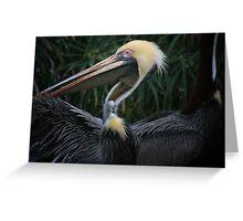 Pelican Wingspan Greeting Card