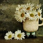 Daisies by Barbara Ingersoll