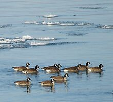 Going With The Floe by deb cole