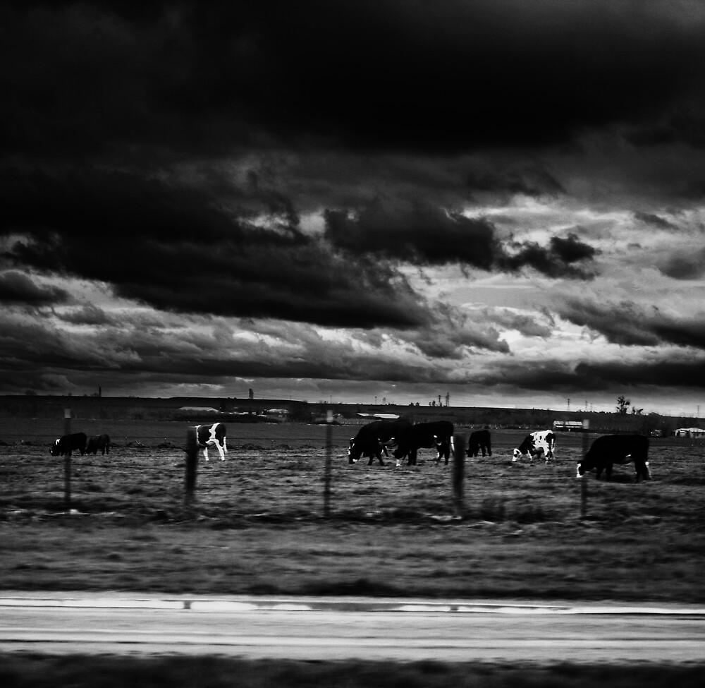 Homestead. by Bekka Björke