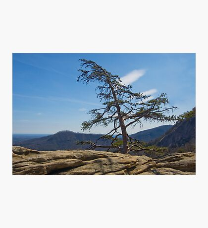 Lone Pine on Top of the Rock Photographic Print