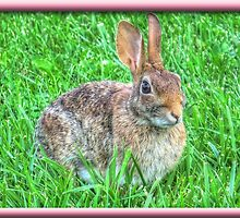 Peter Cottontail by James Brotherton