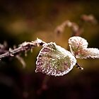 Frosty Morning, Fern Ridge, Oregon by Tim Cowley