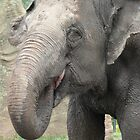 Elephant by SeanDalby